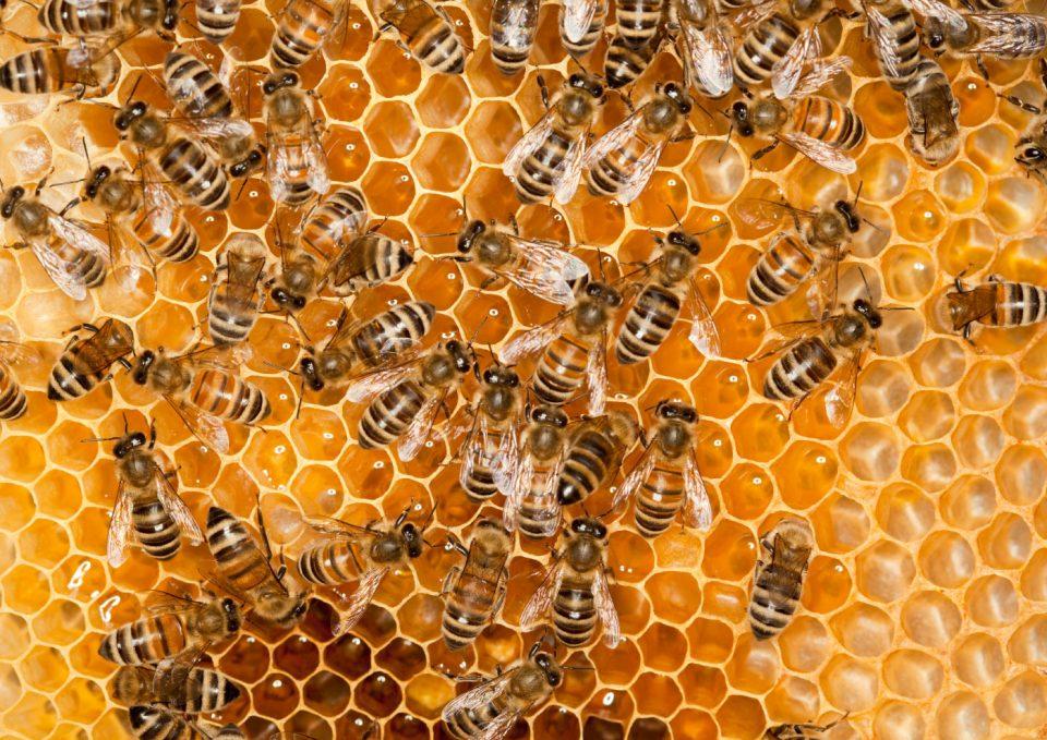 Des ruches, des abeilles et des hommes