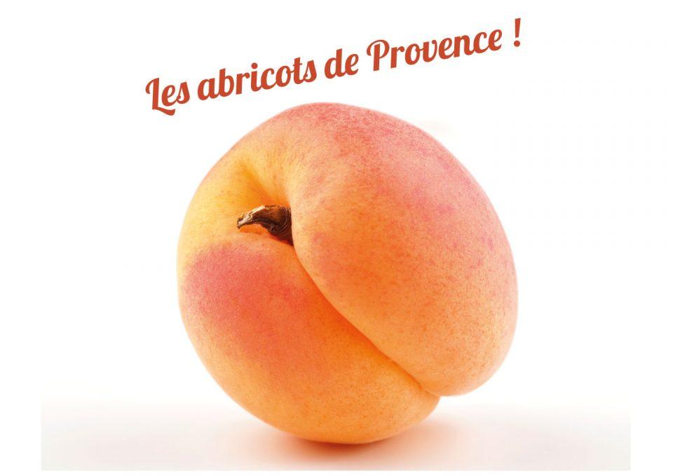 Les abricots provence